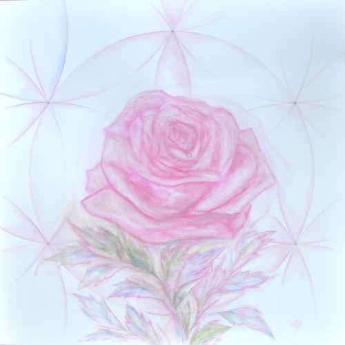 Růže soucitu kompres